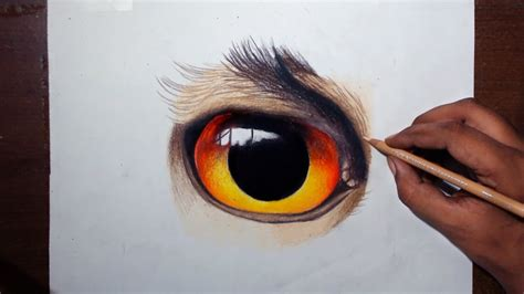 Drawing An Owl Eye - Prismacolor Pencils - YouTube