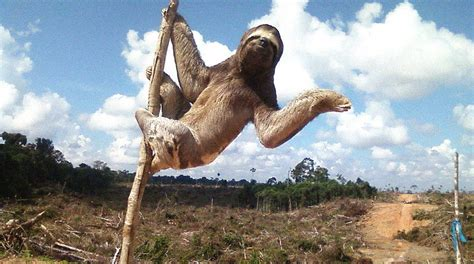 Keep loggers and the palm oil industry out of the Peruvian
