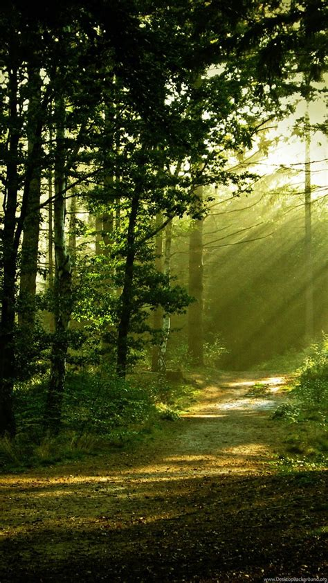 14 Morning Forest Scenery Hd Wallpapers Forest Scenery