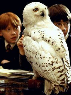 Hedwig's Theme   Music of Harry Potter